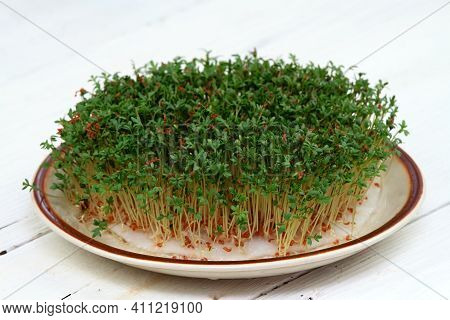 Garden Cress  Growing On The Plate, White Wooden Table. Lepidum Sativum, Also Called Mustard And Cre