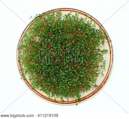 Garden Cress  Growing On The Plate, Flat Lay, White Background. Lepidum Sativum, Also Called Mustard