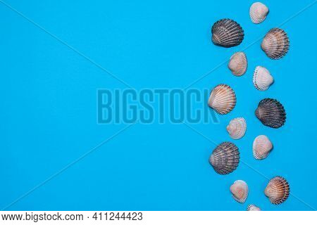 Sea Paper Background Of Blue Color With Seashells. Natural Seashells. Top View. Mock Up