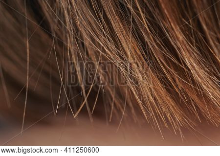 Loss Hair Theme. Ends Of Straight Brown Hair Macro View