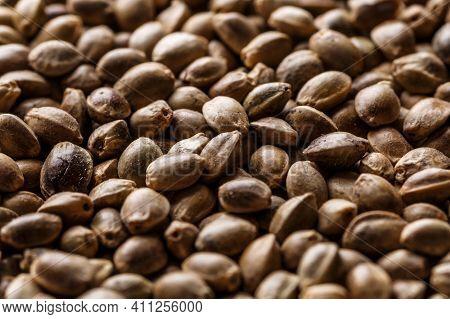 Many Cannabis Seeds. Macro Detail Of Marijuana Seed.hemp Seeds Background In Macro.medicinal Cannabi