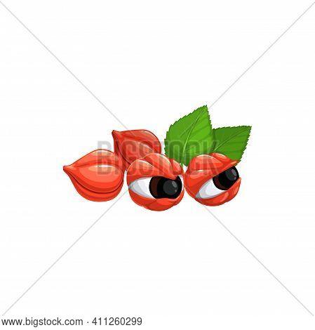 Guarana Superfood Berries Isolated Paullinia Cupana Serbilis. Vector Red Berries And Green Leaves, G