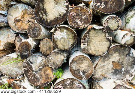 Pile Of A Birch Firewood. Background From Tree Logs. Folded Birch. Work In Forest. Felling Trees.