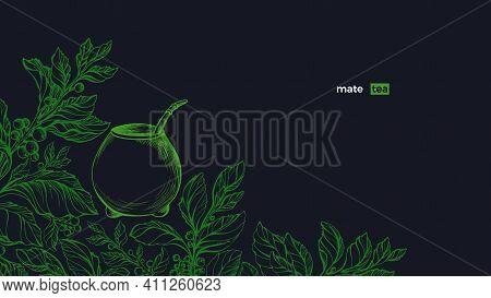 Yerba Mate. Green Plant Set, Calabash. Vector Fresh Bush, Sketch Leaves, Organic Plantation. Art Han