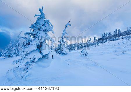 Beautiful Winter Forest Of Beskid Slaski