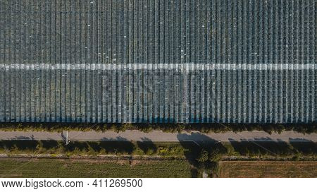 Aerial Top View Of Greenhouse Plant. Agronomy, Year-round Climate Control And Yield, Indoor Farming,