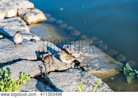 Small Birds Sitting On Small Rocks Near Water Surface Of Small Lake