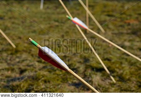 The Archer Collects Stuck Arrows At The Bow For Another Series Of Shots Attacks From A Yew Tradition