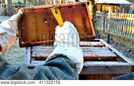 Very Bad Winter, A Lot Of Hives This Winter And Died. Frozen Honeycombs And Hives Covered With Hoarf