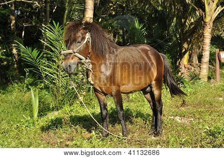 Horse Brown Stand Grass Field