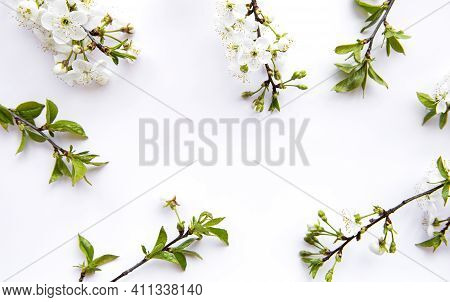 Spring Border Background With Beautiful White Flowering Branches. White Background, Bloom Delicate F