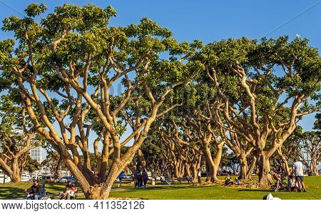 San Diego,ca - April 7,2014:a View Of The Old City Park San Diego,california,united States Of Americ