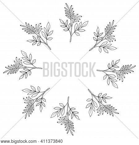 Bitter-wood In Sketch Style, Medicinal Plant. Quassia Amara, Or Amargo, Hand Drawn Doodle Illustrati
