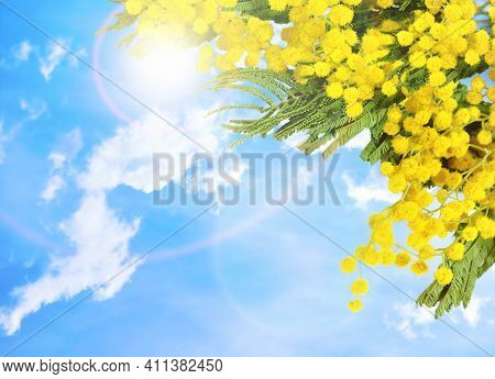 Easter background. Mimosa spring flowers against blue sky. Spring flower background for 8 March, Mother\'s day and Easter holidays,free space for text, Easter design