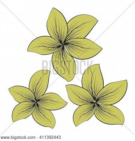 Beautiful Collection With Vector Flowers For Decorative Design. Beautiful Macro Flower Illustration.