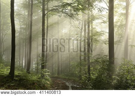 Spring forest path Nature woods sun trees Nature landscape Nature landscape Nature landscape background Nature background Nature landscape Nature background landscape Nature background Nature landscape Nature landscape Nature landscape Nature background.