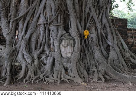 Buddha Head In A Wooden Root, The Head Is Inside The Tree At Wat Phra Si Mahathat In Phra Nakhon Si