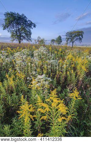 Goldenrod Dominates The Late Summer Prairie Landscape At Springbrook Prairie Forest Preserve In Dupa