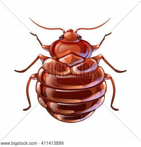 Red Begbug, Macro Vector Illustration In Cartoon
