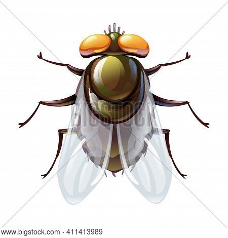 Green Fly Bug In Cartoon Style, Stylized Insect