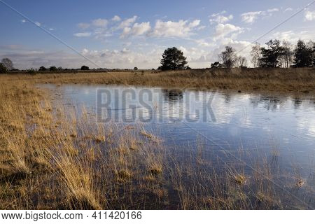 Landscape With A Pond On The Nature Reserve Strabrechtse Heide Near Someren In The Dutch Province No