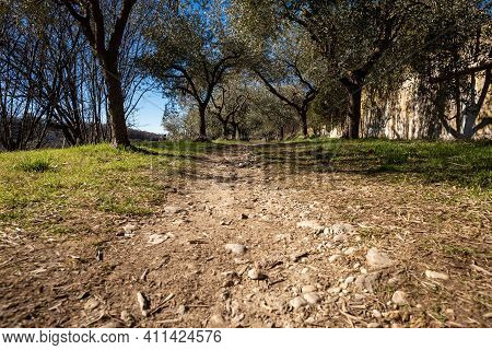 Footpath Among The Olive Trees On The Coast Of The Lake Garda (lago Di Garda) With Blue Sky And Clou