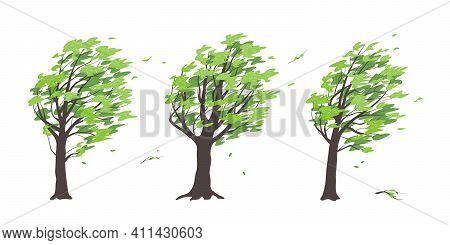Set Of Old Trees With Dark Trunks And Green Leaves Isolated On White Background. Deciduous Tree In B