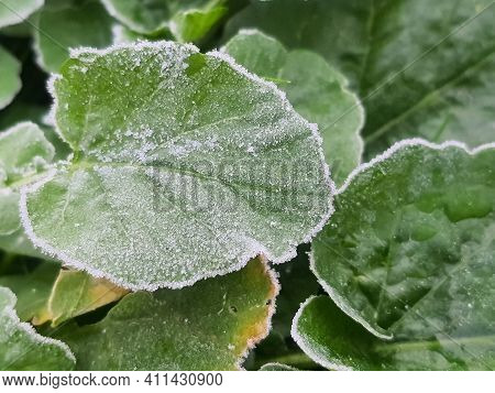 Green Grass On Meadow Is Covered With Snow. Frost In Autumn Garden, Frost On Grass.frosted Grass On