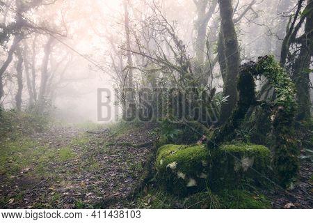 Foggy Forest With Sun Rays In Tarifa, Cadiz, Spain..