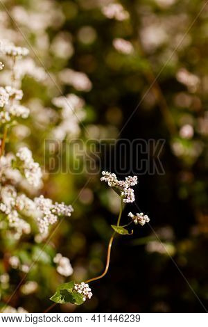 Outdoor Field Flora Meadow Natural Golden Botany Flora Agriculture