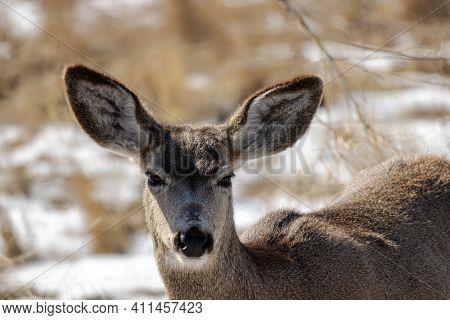 An Adorable Deer At Rocky Mountain Arsenal National Wildlife Refuge, Colorado.