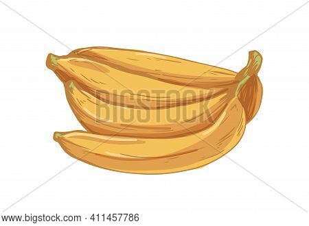 Bunch Of Ripe Bananas Isolated On White Background. Hand-drawn Bundle Of Fresh Yellow Fruits. Colore