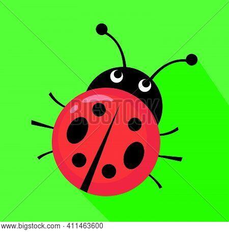 Ladybug Vector Illustration On Flat Style Design