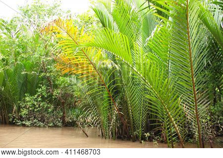 Palm leaves in delta of Mekong river, Vietnam, Asia