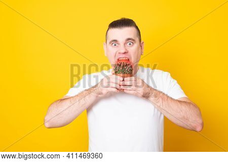 Funny Young Man Bites A Cactus In A Pot. Man Tries To Bite Off A Cactus On A Yellow Background.
