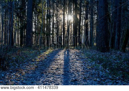 Backlight Through Forest A Cold Winter Morning