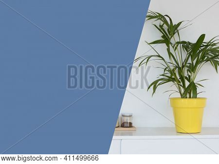 Composition of house plant image with large blue diagonal cut copy space. domestic interior presentation concept with copy space, digitally generated image.