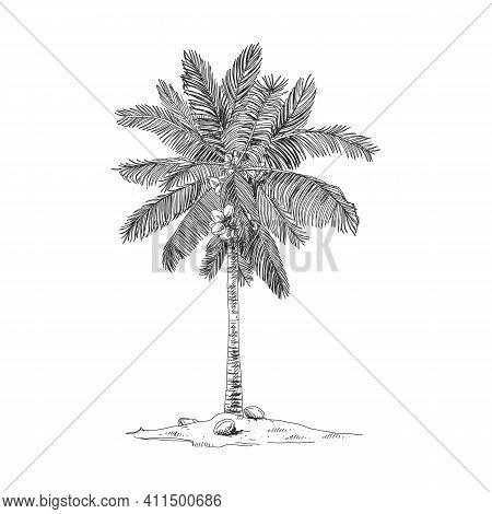Coco Palm, Retro Hand Drawn Vector Illustration.