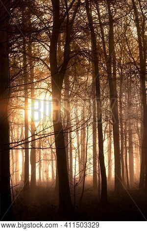 Beautiful Wild Forest In Dawn Sunrise With Glowing Sun Through The Trees. Dark Shadows And Mist In N