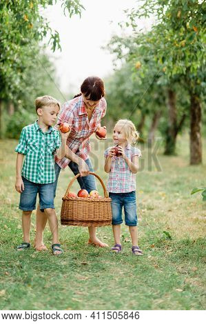 Family Picking Apples On Farm In Autumn. Children With Mother Playing In Tree Orchard. Cute Little G