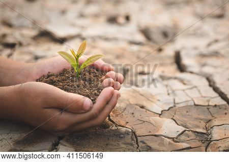 A Tree In The Hands Of A Child On The Background Of Dry And Cracked Soil, Plant A Tree, Reduce Globa
