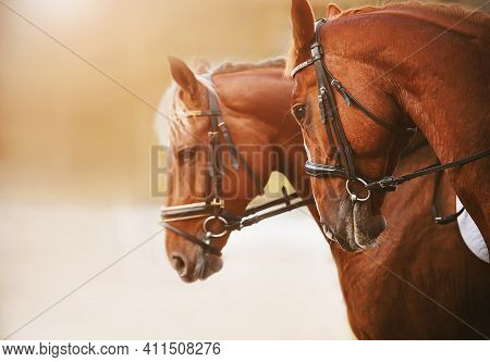 Portrait Of Two Sorrel Horses With A Light Mane And Bridle On The Muzzle, Standing Side By Side On A