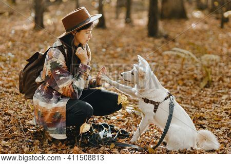 Stylish Woman Training White Dog To Give Paw In Sunny Autumn Woods. Cute Swiss Shepherd Puppy