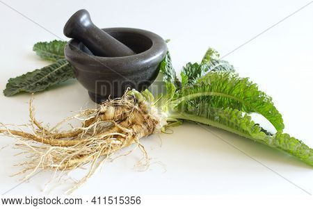 Blurred Roots Teasel Dipsacus Plant, Marble Mortar, And Pestle. In Folk Medicine, Their Roots Are Us