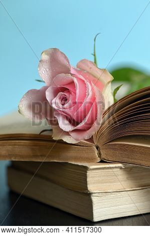 Closeup Of Open Book And Pink Rose