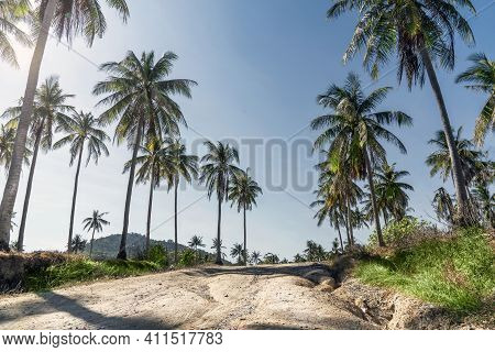 Palm Trees And Sun. Blue Sky Over A Dirt Road On Racha Island In Thailand