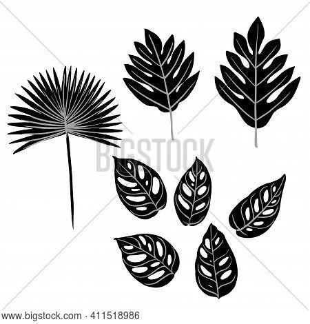 Leaves Of Tropical Plants. Fan Palm Chamaerops, Monstera Monkey, Breadfruit