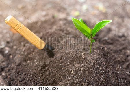 World Soil Day Concept Promote The Increase Of Oxygen In The Air. Planting Trees Back Into The Fores