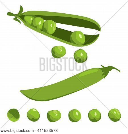 Open And Whole Closed Pea Pod And Single Peas Set On White Background. Fresh Ripe Legumes In Cartoon