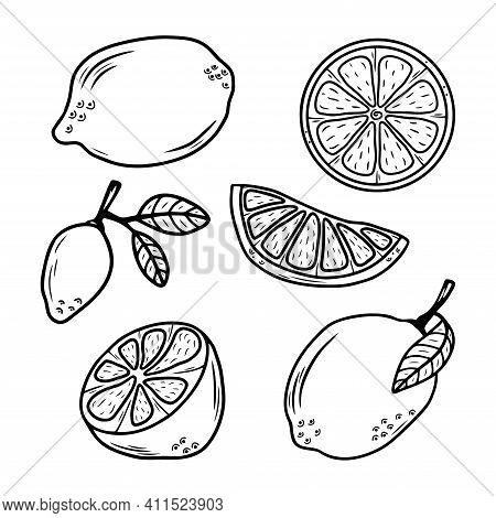 Set Of Hand Drawn Citrus Fruit Lemons Isolated On A White Background. Doodle, Simple Outline Illustr